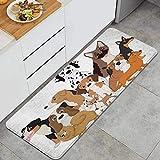 QIUTIANXIU Mascota Perros Graciosos Animales Perrito Vida Salvaje Adorable Agilidad Animal Basset Hound Grupo Beagle Alfombrillas de Cocina Antideslizantes Felpudo Lavable