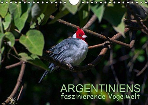 Argentiniens faszinierende Vogelwelt (Wandkalender 2019 DIN A4 quer): Ein Querschnitt durch die faszinierende, farbenfrohe Vogelwelt Argentiniens in ... (Monatskalender, 14 Seiten ) (CALVENDO Tiere)
