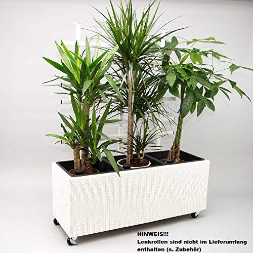 Elegant Einrichten Pflanzkübel, Pflanztrog Polyrattan mit Rankgitter 82x30x100cm weiß.