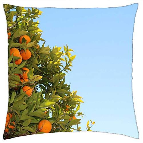 LESGAULEST Throw Pillow Cover (24x24 inch) - Mandarins Citrus Oranges Fruit Tree Juicy