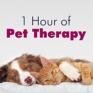 1 Hour of Pet Therapy: Sleep Music for Cats & Dogs