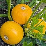 30Pezzi Zucchine Semi Annuale Semi Di Cimelio Per Giardino All'aperto Piantagione Di Fattoria I Giardinieri Del Raccolto Autunnale Verdure Di Zucca Preferite