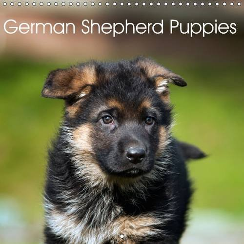 German Shepherd Puppies 2016: Who can resist their magic? (Calvendo Animals)