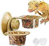 Pipihome Reptile Feeder - Comedero con ventosa, diseño de lagartija camaleón, recipiente de comida transparente, viene con 3 paquetes de cuencos de plástico (doble)