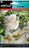 Semillas Amomáticas - Alcaparra - Batlle