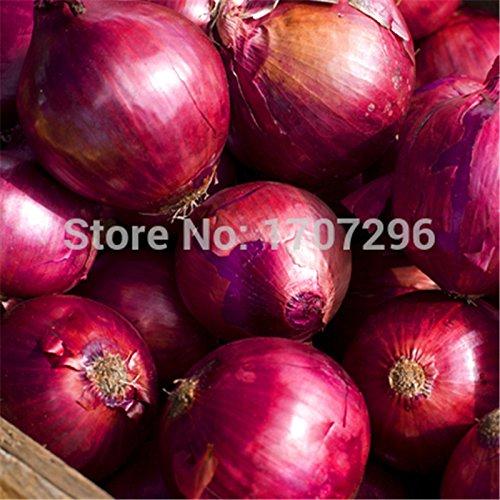 200 Vert menthe Graines de légumes balcon en pot à herbes aromatiques Graines de menthe poivrée Rare pour saine
