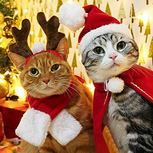 - Katze N Hut Kostüm