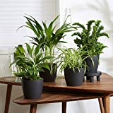Mix 4 plantes purificatrices d'air avec cache-pots | Areca,...