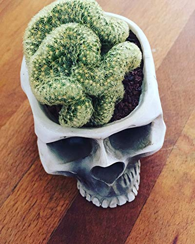 Brain Cactus Skull-20 Inch By 30 Inch Laminated Poster With Bright Colors And Vivid Imagery-Fits Perfectly In Many Attractive Frames
