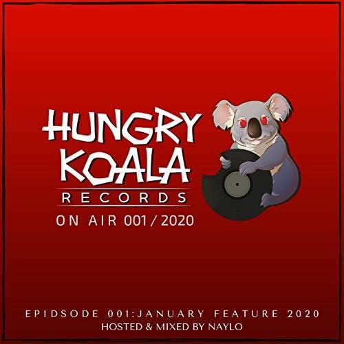 Hungry Koala