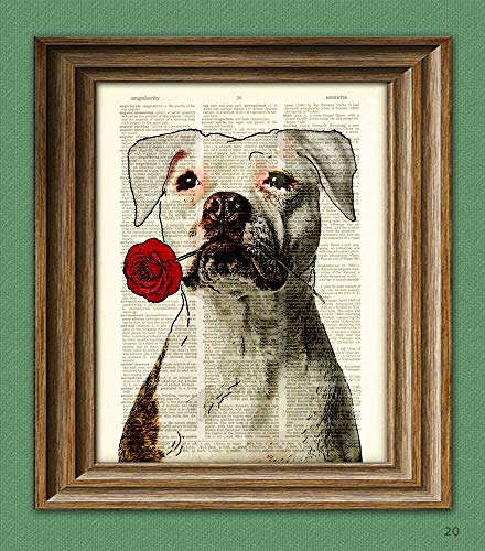 """Pitbull Art Print""""Rosie the Lover"""" White Pit Bull With Flower Illustration Beautifully Upcycled Dictionary Page Book Art Print"""
