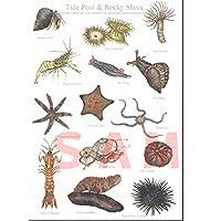 cicada はがき 海の生き物シリーズ ハタタテハゼ ツノダシ ポストカード marineC