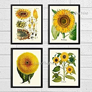 Sunflower Art Print Set of 4 Antique Beautiful Yellow Plants Garden Nature Home Room Wall Decor Unframed
