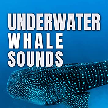 Underwater Whale Sounds