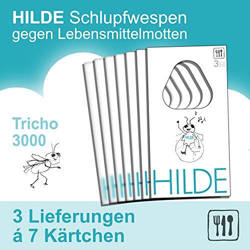 Mottenshop24 ***Hilde*** Schlupfwespen gegen Lebensmittelmotten 3x7 Karten | natürlich - wirksam - chemiefrei - schonend