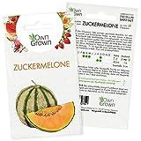 Zuckermelone Samen: Premium Melonen Samen für 15 Zuckermelonen Pflanzen – Melonensamen der süßen Sorte Charentais – Charentais Melone Samen, Saatgut Melone, Obst Samen – Zuckermelonen Samen OwnGrown