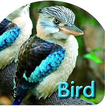 Paperback Kids Board Bk Birds Book