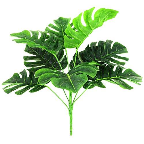 XONOR Plantas