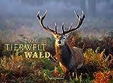Tierwelt Wald 2020, Wandkalender im Querformat (45x33 cm) - Tierkalender mit heimischen Wildtieren mit Monatskalendarium
