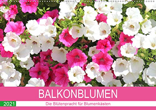 Balkonblumen. Die Blütenpracht für Blumenkästen (Wandkalender 2021 DIN A2 quer)