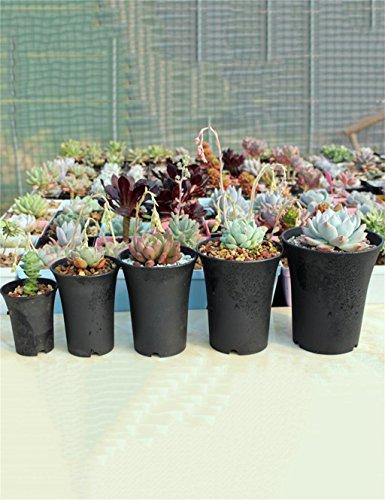 XYZ A Vita Alta In Plastica Vaso Da Fiori, Piante Grasse Holder, Planter Fiore ( Pacchetto Di 5) delicato durevole