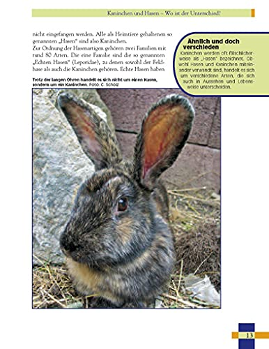 Leben mit Kaninchen: Der ausführliche Leitfaden für die Haltung von Kaninchen. (NTV Kleinsäuger) - 4