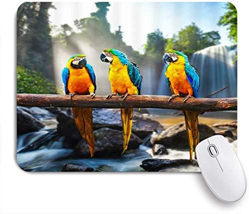 HUAYEXI Stoff Mousepad,Papagei Niedliche Papageien Vögel Blau Gelb Federbaum Ast Wasserfall Felsen Grüne Pflanzen Sonnenlicht Natur Szenisch,Rutschfest eeignet für Büro und Gaming Maus