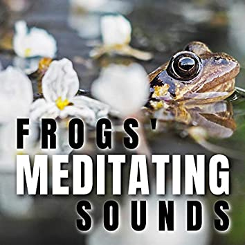 Frogs' Meditating Sounds