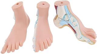 Homyl 3pcs Foot Model Human Normal / Flat /Arched Foot Model Anatomy School Studying Supplies