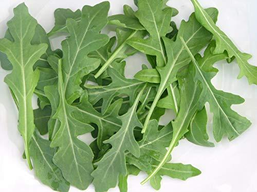 SANHOC Samen-Paket: Rucola '' Coltivata '' 5000 Frische Bio-Bulk-Seeds