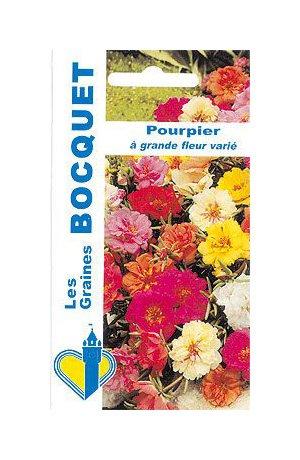 Les Graines Bocquet - Graines De Pourpier Fleuri À Fleur Double Varié - Graines Potagères À Semer - Sachet De 0.7Grammes