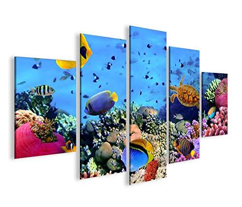 islandburner Bild Bilder auf Leinwand Aquarium Fische Meerwasser Tropische Doktorfische MF XXL Poster Leinwandbild Wandbild Dekoartikel Wohnzimmer Marke