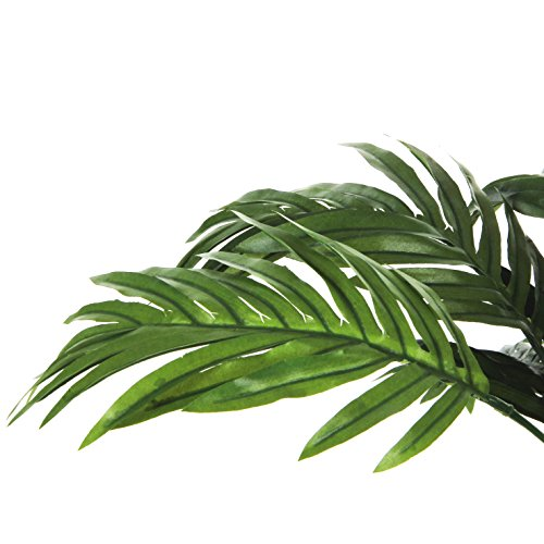 Areca Palme H45 D60 cm, grün im Tontopf D 11.5  cm - 4