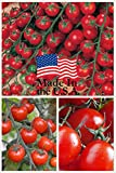 Sweet Million Cherry Tomato (Organic) Tomato 150 Seeds Upc 643451295290