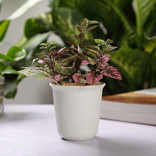 T4U 15CM プラスチック製 植木鉢 多肉植物 サボテン鉢 トレイ付き ホワイト 10点セット