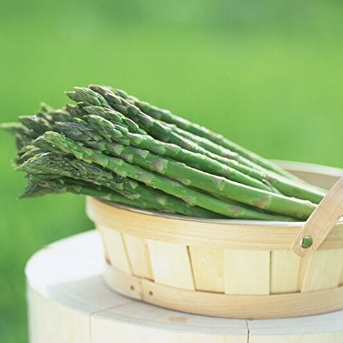 10 particules d'asperges graines, vert graines de légumes Perennial Garden Bamboo