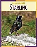 Starling (21st Century Skills Library: Animal Invaders) (English Edition)