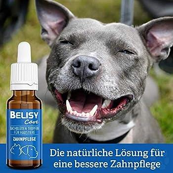 BELISY Fleurs de Bach - Soin dentaire en gouttes pour chiens et chats - Mélange spécial de fleurs de Bach pour dents avec thym et menthe poivrée - 20 ml