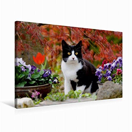 Premium - Lienzo textil (75 cm x 50 cm, horizontal, diseño de gato blanco y negro en el jardín floreciente), color blanco y negro Arce con hojas rojas (CALVENDO Animales) Animales Calvido