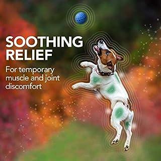 أفضل الفيتامينات والأكسيجين الحرة الكلب البيطري الأسبرين