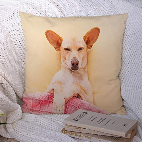 Decorative Polyester Throw Pillow Case Best Chihuahua Comfortable Dog Headache Hangover Sleeping Bed Animals Wildlife Healthcare Medical Square Cushion Covers for Couch Bed Home Decor 20x20 Inch