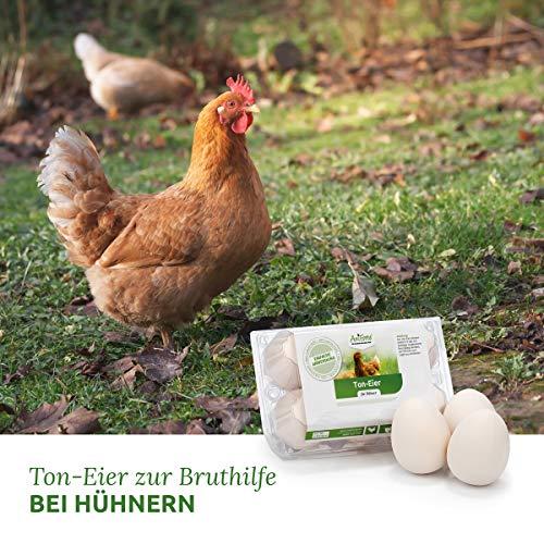 AniForte künstliche Hühnereier - 2
