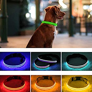PPWW Light Up Dog Collar - LED Dog Collar - USB Rechargeable Waterproof - Safe Design - Glow Collars for Dogs Large,Green