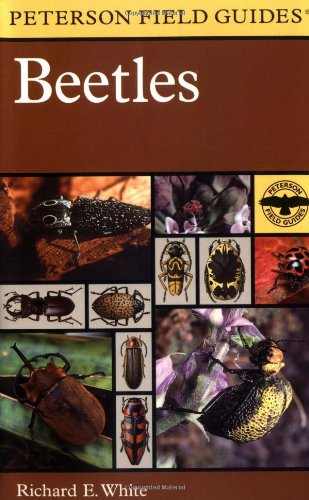 A Field Guide to the Beetles of North America (Peterson Field Guide)