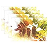 ENEVOTX Foliage Branch Leaves Autumn Colors Color Wood Placemats Set of 4 Heat Insulation Stain Resistant for Dining Table Durable Non-Slip Kitchen Table Place Mats