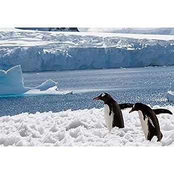 CSFOTO 6x4ft Penguin Backdrop South Pole Antarctica Glacier Frozen Background for Photography White Snow World Theme Children Birthday Party Banner Kids Portrait Photo Vinyl Wallpaper