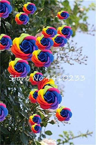 Ponak nuevas 100 PC rosal trepador semillas de flores para jardinería mixta