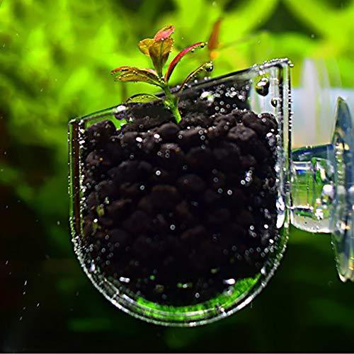 Danigrefinb Creative Aquarium Glas Pflanztasse mit rotem Wurm