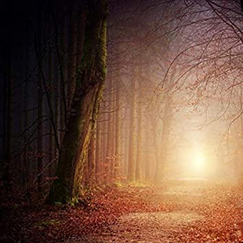 Illusion in the Forest