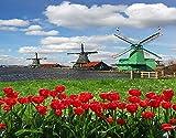HASENCIV Pintura de Diamante DIY para Adultos Molinos de viento holandeses tradicionales con tulipanes rojos en Amsterdam Scenic Field River decorativo Bricolaje Diamond Painting 30x40cm